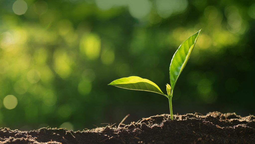 You plant growing because of great soil products by Asheville Mulch Yard in the Asheville, NC area